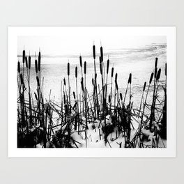 Winter Cattails Art Print