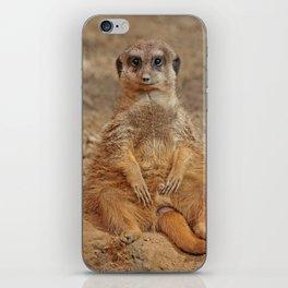 Funny Meerkat iPhone Skin