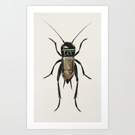 Field crickets (Gryllus campestris) illustrated by Charles Dessalines D' Orbigny (1806-1876) Art Print