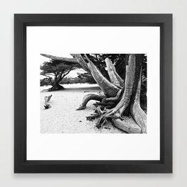 Cypress I Framed Art Print
