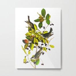 Blackpoll Warbler Bird Metal Print