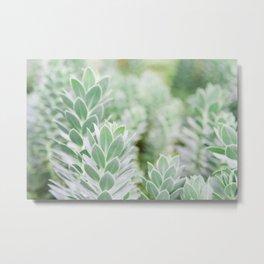 Succulent Metal Print