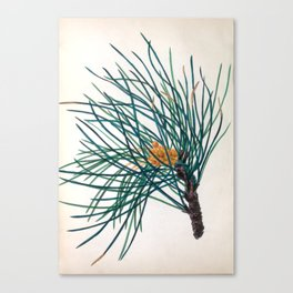 """The Stone Pine, from """"The Spirit of the Woods,"""" 1849 (benefiting the Arbor Day Foundation) Canvas Print"""