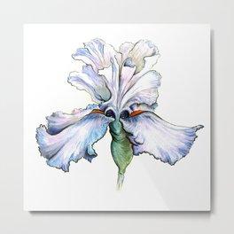 Light Iris Metal Print