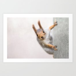 Squirrel - Who are you? Art Print