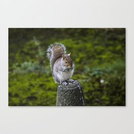 The Chubby Squirrel Canvas Print