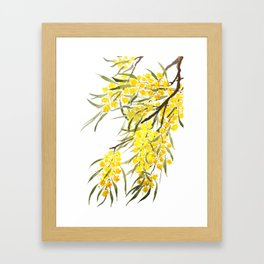Godlen wattle flower watercolor Framed Art Print