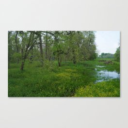 The Woods in Spring Canvas Print