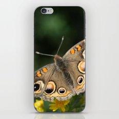 Common Buckeye iPhone & iPod Skin