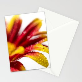 Water Droplets On Mum Petals Nature | Botanical | Floral Photograph Stationery Cards
