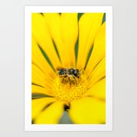 Searching for pollen Art Print