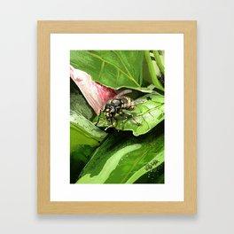 Wasp on flower16 Framed Art Print