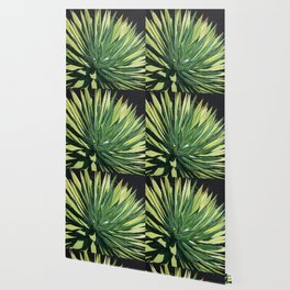 Yucca with spider Wallpaper