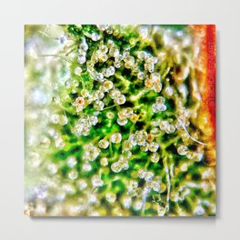 Cascade Trichomes Skywalker OG Kush Strain Close Up View Metal Print
