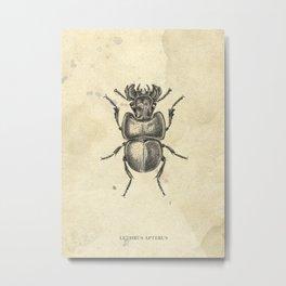 Beetle drawing Metal Print