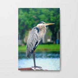 Great Blue Heron On Deck Metal Print