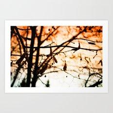 Late Autumn Chill Art Print