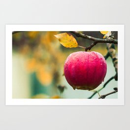 Apples in the fall Art Print