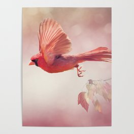 Male Northern Cardinal Flying  ,watercolor painting Poster