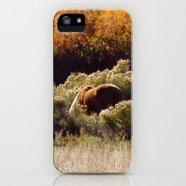 Palomino Pony in Autumn Golds photography by CheyAnne Sexton iPhone Case
