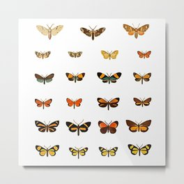 Butterfly Collection - Square Metal Print