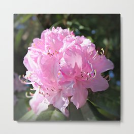 Rhododendron Square Metal Print
