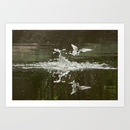 Little tern Art Print