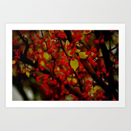 Red Berries II Art Print