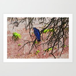 Blue Pigeon Pink Wall Bare Tree Art Print
