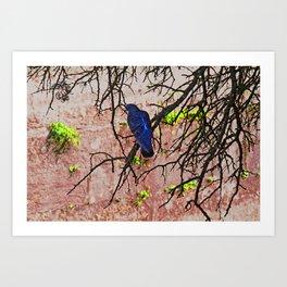 Blue Pigeon Pink Wall Bare Tree Art Print