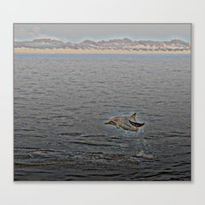Dolphin Leap Canvas Print