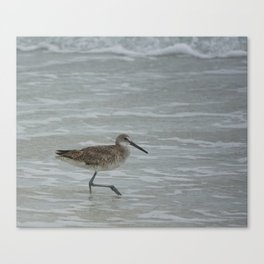 Sandpiper With A Leg Up Canvas Print