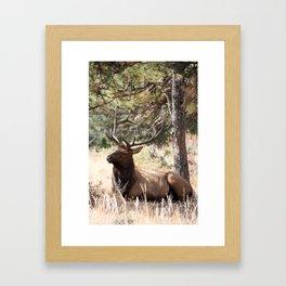 Bugling Season Framed Art Print