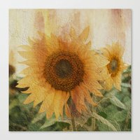 sunflower Canvas Prints featuring sunflower by VanessaGF