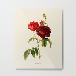 Vintage Red Rose Botanical Illustration Metal Print