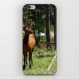 Rocky Mountain Wapiti iPhone Skin