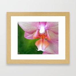 Jenn's Orchid Framed Art Print