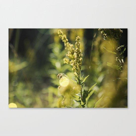 Mountain Meadows 02 Canvas Print