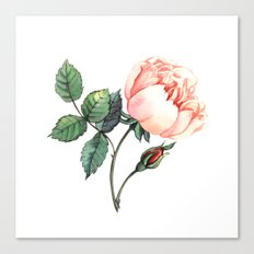 Illustration with watercolor rose Canvas Print