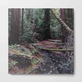 Muir Woods, Marin County, CA Metal Print