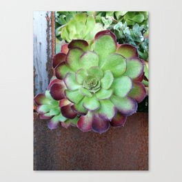 The Rusty Succulent Canvas Print