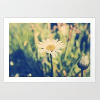 rileigh smirl Art Prints featuring Daisy by Rileigh Smirl