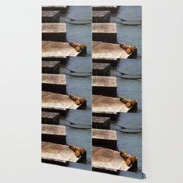 Sunbathing Seals Wallpaper
