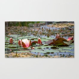 Water Lily. Canvas Print