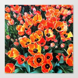 Bright Red Tulips of Istanbul Canvas Print