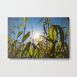 Corn Field 16 Metal Print