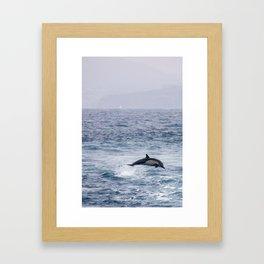 Leaping Common Dolphin Framed Art Print