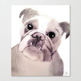 Bully Bull Dog Canvas Print