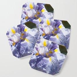 The love of the Iris by Teresa Thompson Coaster