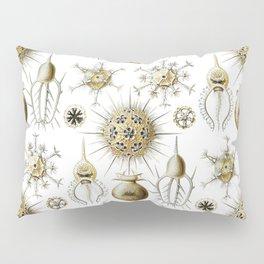 Ernst Haeckel - Phaeodaria Pillow Sham